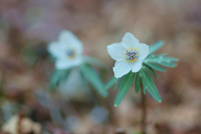 六甲高山植物園_e0181373_20444084.jpg