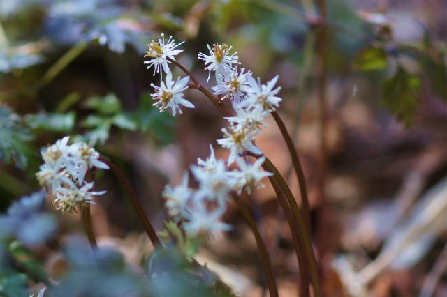 六甲高山植物園_e0181373_20475658.jpg