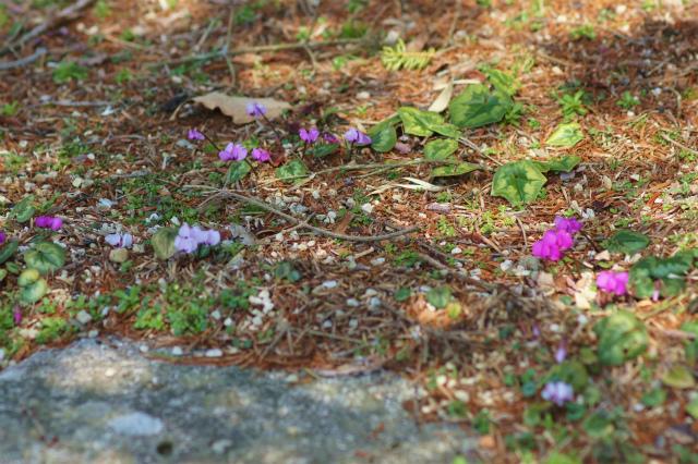 六甲高山植物園_e0181373_2050373.jpg