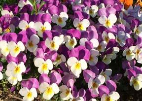 春散歩_b0003474_17114381.jpg