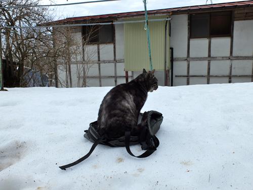 猫日和 1:はじめまして_a0180681_1575943.jpg