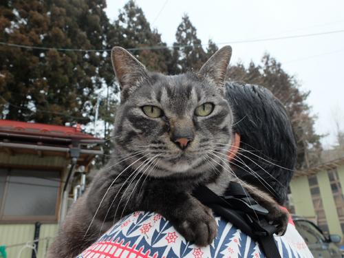 猫日和 1:はじめまして_a0180681_1591081.jpg