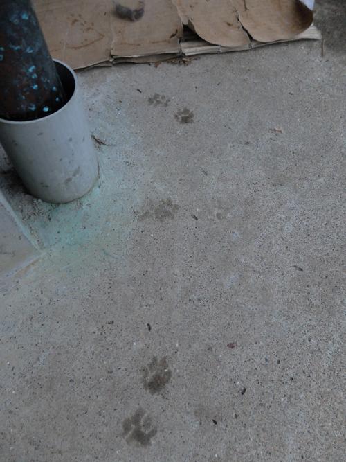 猫日和 6:Memento Mori_a0180681_2245243.jpg