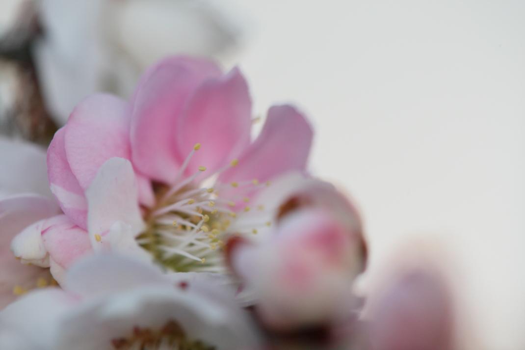 第118回 水戸の梅まつり 梅大使さんと「思いのまま」 2014・03・23_e0143883_1681058.jpg
