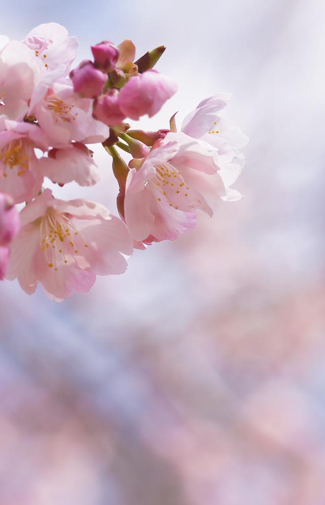 3月下旬 コツバメ・・やっと(^^)_b0078795_1616973.jpg