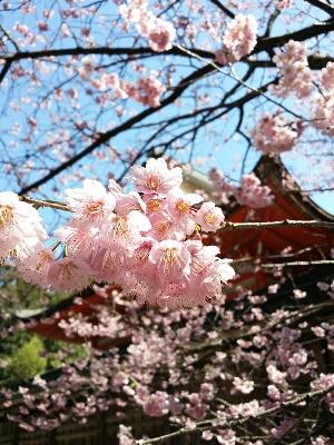 春色(о´∀`о)_b0240634_1972767.jpg