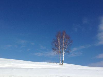 春への準備_e0326953_22362194.jpg