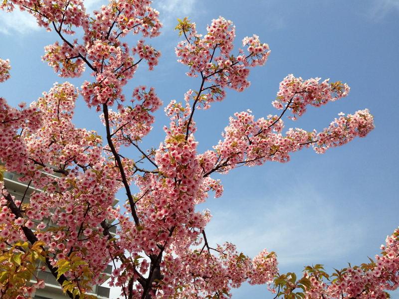 春近し_e0053660_2016626.jpg