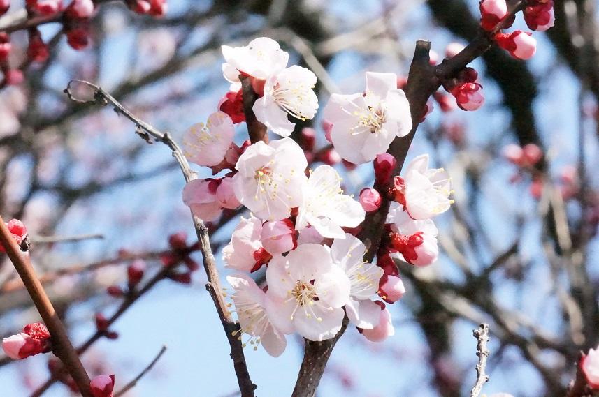 一気に春~!_b0124462_1452930.jpg