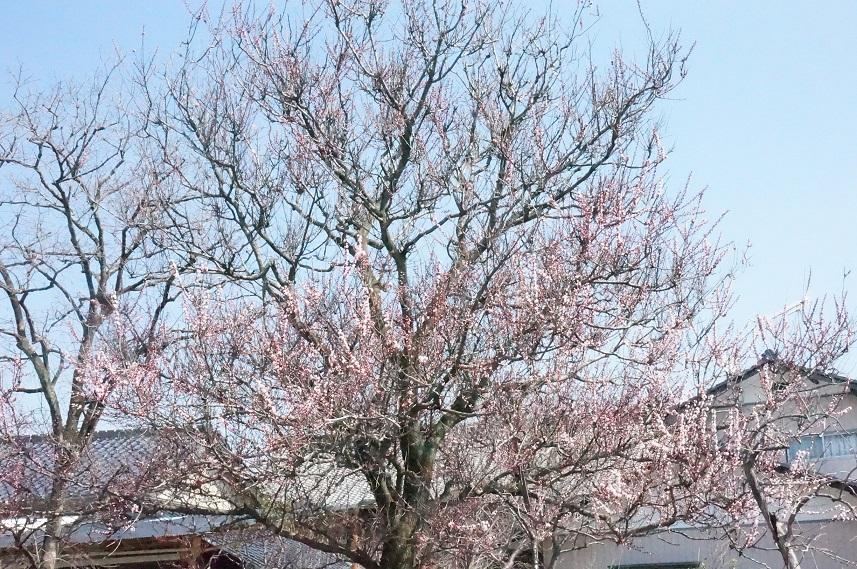 一気に春~!_b0124462_145858.jpg