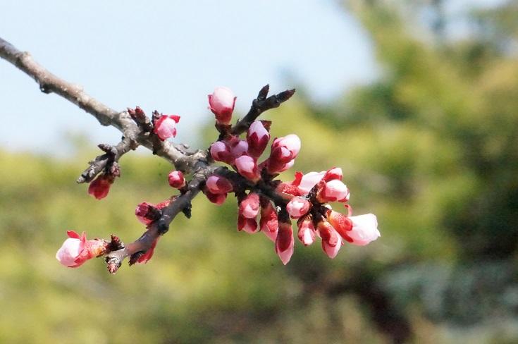一気に春~!_b0124462_1465973.jpg