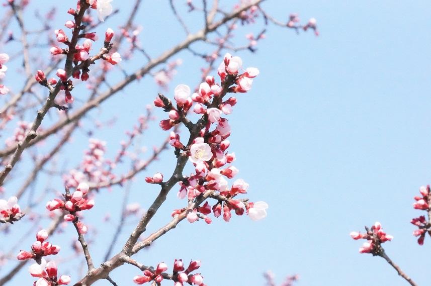 一気に春~!_b0124462_146763.jpg