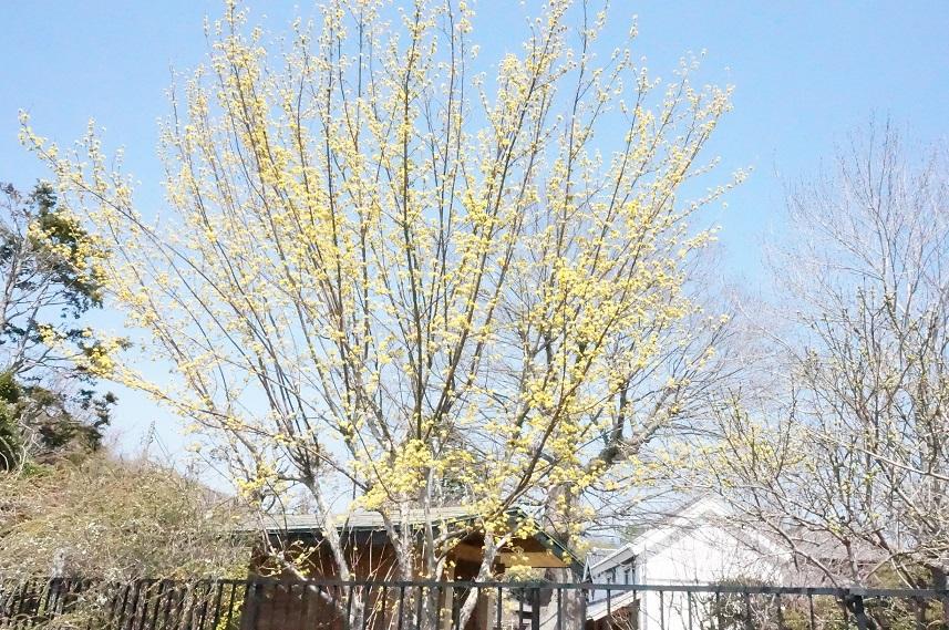 一気に春~!_b0124462_1472083.jpg