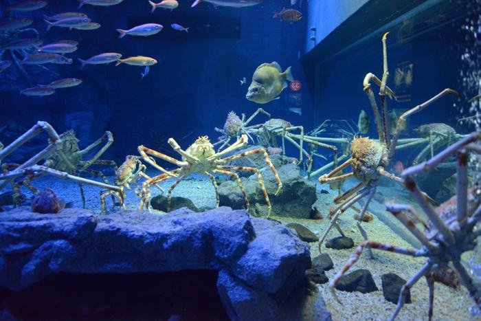 海遊館写真_e0171573_1803833.jpg