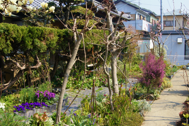 ハクモクレンの庭_e0181373_2183644.jpg