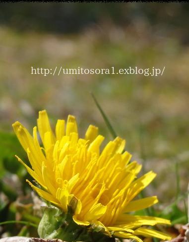 春を探して_b0324291_00200603.png