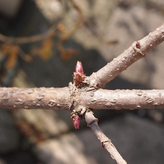 今日は春の陽気でした。_a0292194_1837880.jpg