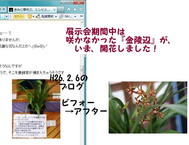 f0203094_16455011.jpg