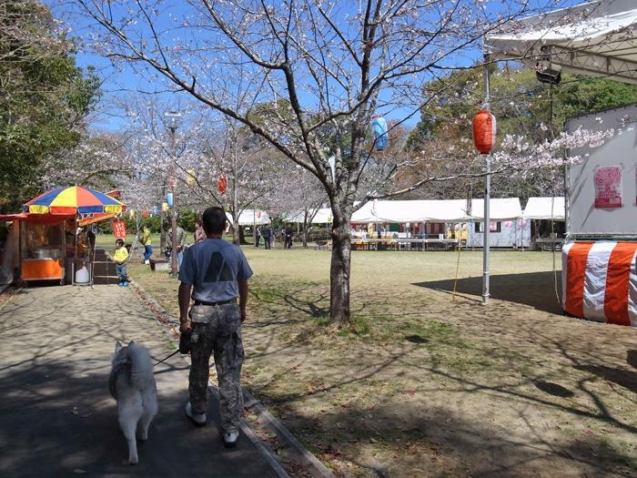 静かなる桜まつり♪_c0049299_22554782.jpg
