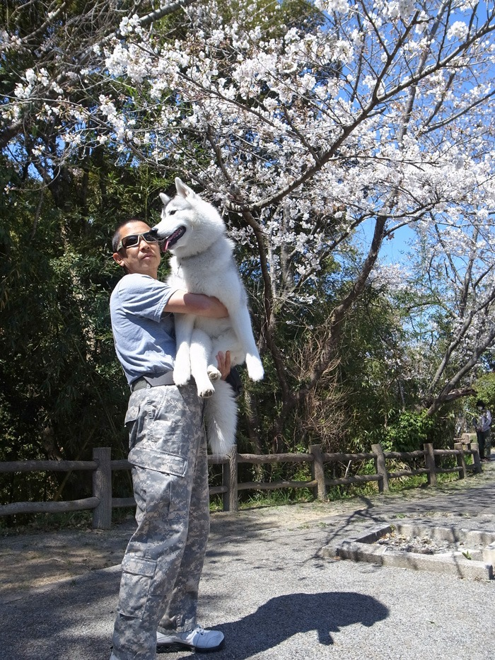 静かなる桜まつり♪_c0049299_2258876.jpg