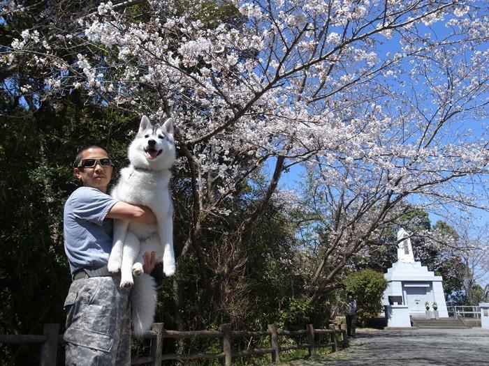 静かなる桜まつり♪_c0049299_2259172.jpg