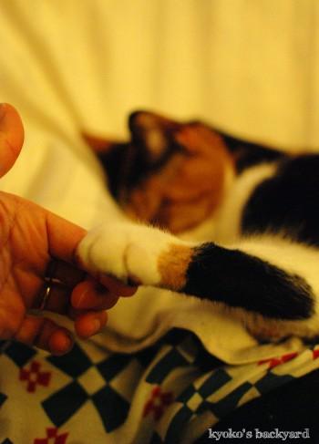 猫の爆睡度_b0253205_1334277.jpg
