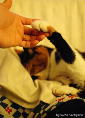 猫の爆睡度_b0253205_134916.jpg
