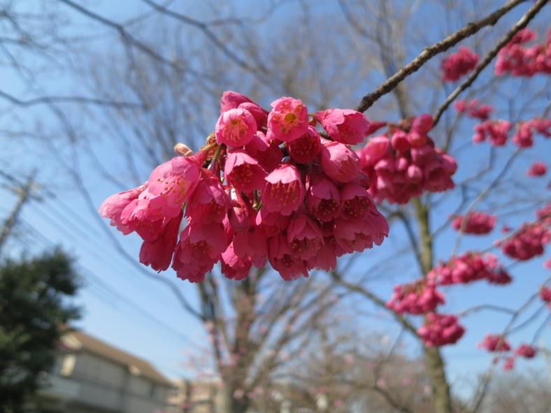 【散撮】春ですね?_f0141609_2052366.jpg