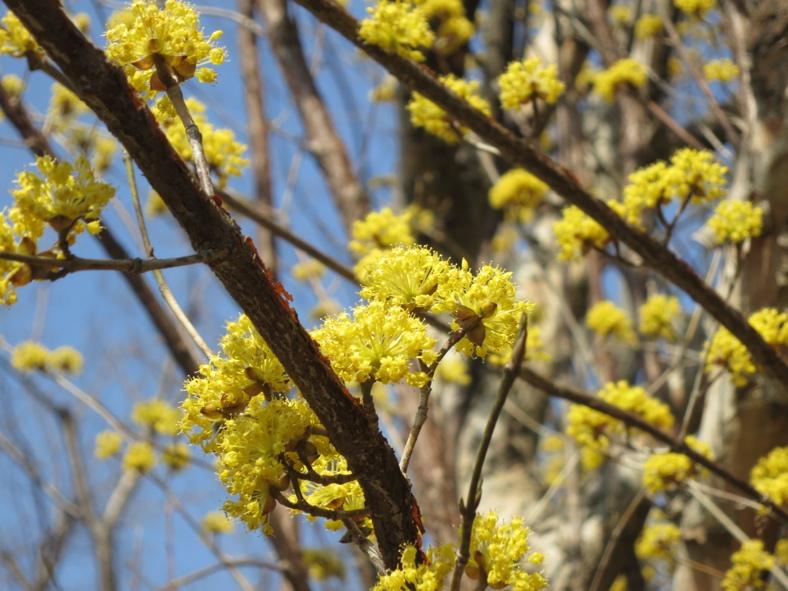 【散撮】春ですね?_f0141609_205261.jpg