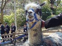 五月山動物園が少し大きくなってりニューアルオープン♪ちびっこ広場は忍者の館に変身♫_c0133422_0204561.jpg