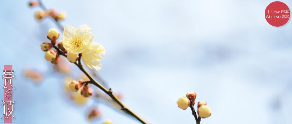 富山市「馬場記念公園」の南日梅林(黄梅3/16)_b0157849_15475871.jpg