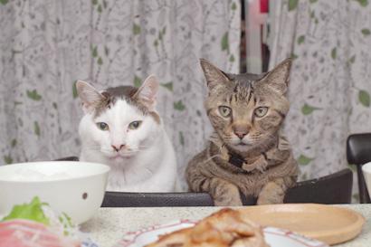 「うちの猫ら3」入稿!_a0028451_1185130.jpg