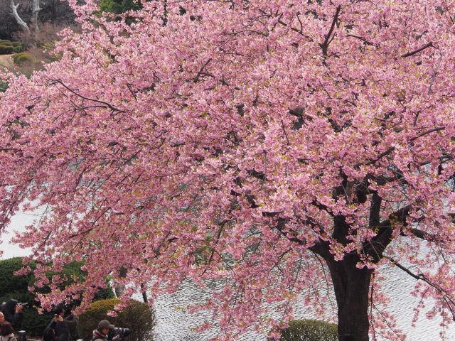 水辺の桜_a0257652_17235997.jpg