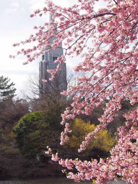 水辺の桜_a0257652_17244767.jpg