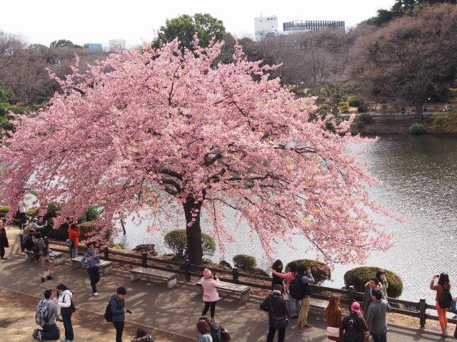 水辺の桜_a0257652_17285429.jpg