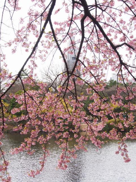 水辺の桜_a0257652_17324955.jpg