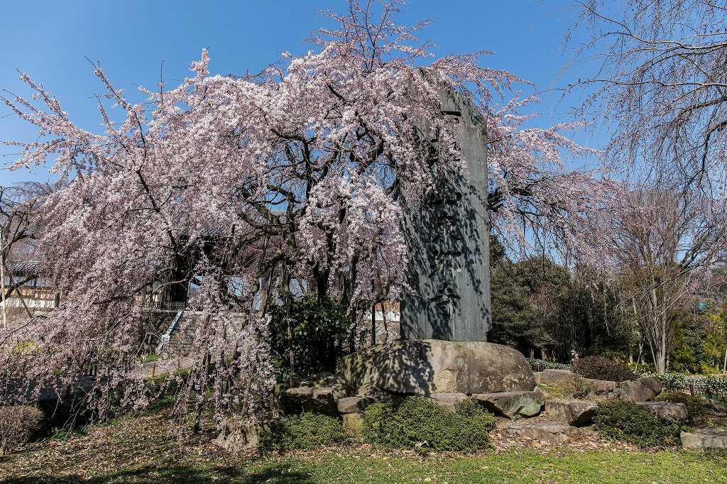 東郷寺の枝垂れ桜_f0044056_20480349.jpg