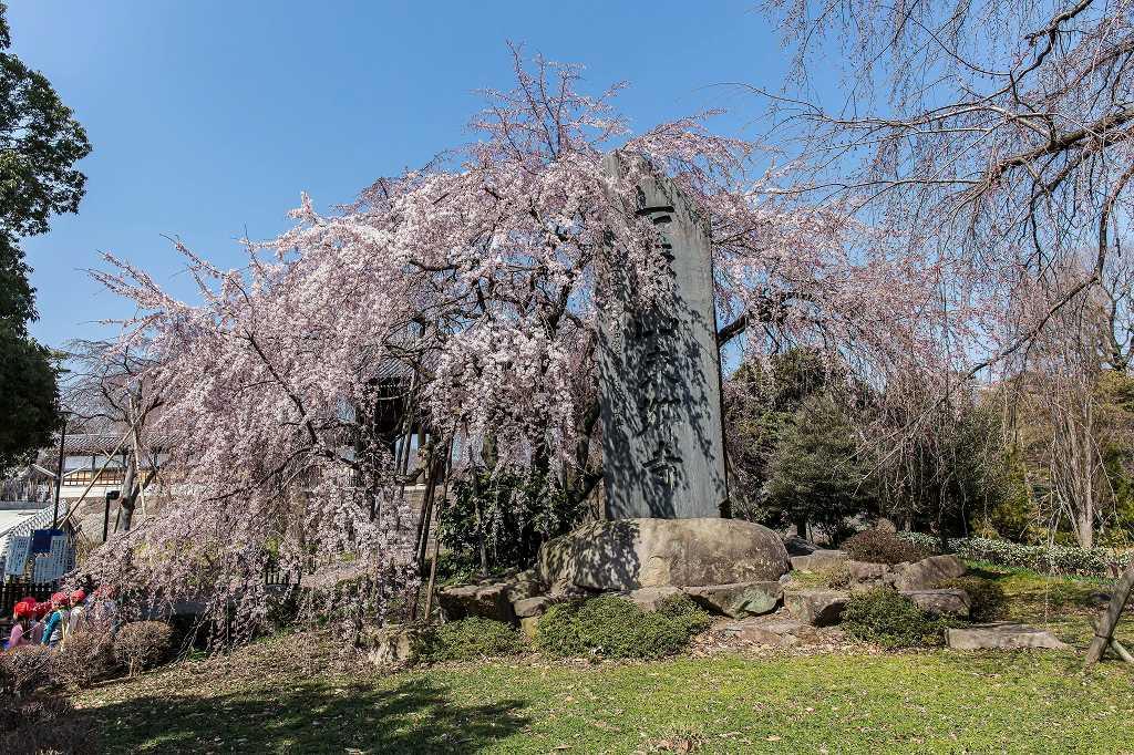 東郷寺の枝垂れ桜_f0044056_20491515.jpg