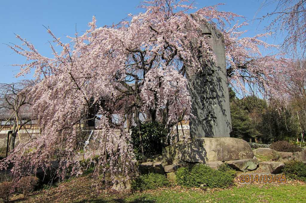 東郷寺の枝垂れ桜_f0044056_20551104.jpg