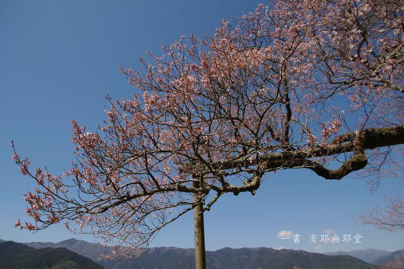 高知県・仁淀川・天空のひょうたん桜_a0157263_20041427.jpg