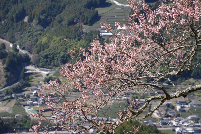 高知県・仁淀川・天空のひょうたん桜_a0157263_20045274.jpg