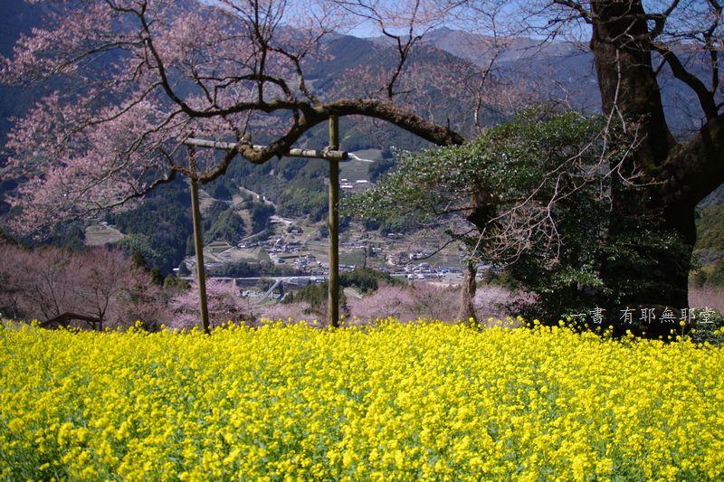 高知県・仁淀川・天空のひょうたん桜_a0157263_20050015.jpg