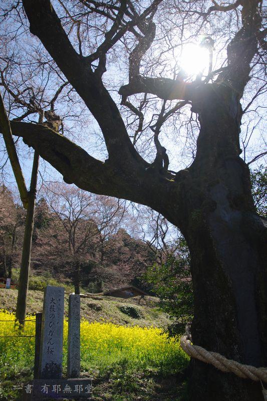 高知県・仁淀川・天空のひょうたん桜_a0157263_20051309.jpg