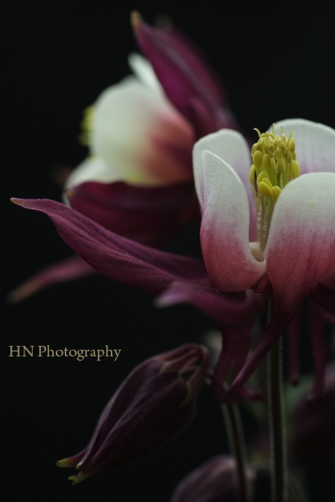 TAMRON 90/2.5 Macroで花を撮る_a0191069_17422188.jpg