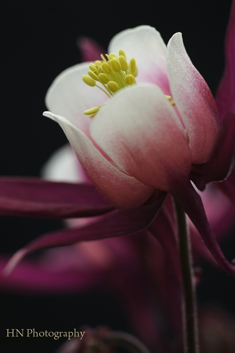 TAMRON 90/2.5 Macroで花を撮る_a0191069_17422269.jpg