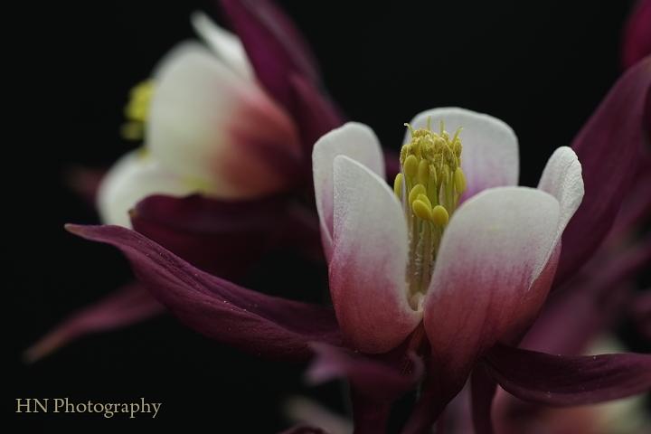 TAMRON 90/2.5 Macroで花を撮る_a0191069_17424297.jpg