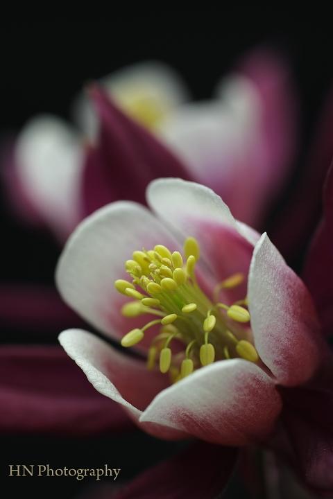 TAMRON 90/2.5 Macroで花を撮る_a0191069_17424386.jpg