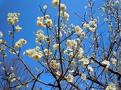 遊びの山にも春が溢れ出す ・・・_b0102572_10291120.jpg