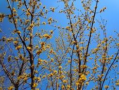 遊びの山にも春が溢れ出す ・・・_b0102572_10332762.jpg