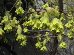 遊びの山にも春が溢れ出す ・・・_b0102572_10334754.jpg